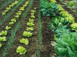 Convalidación FOL en un FP Técnico en Producción Agropecuaria